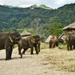 """""""Elephant Gathering"""" by visionsofbrahma"""