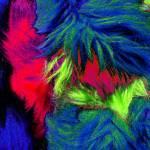 """Furry Abstract"" by Linandara"