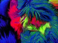 Furry Abstract