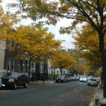 """Beautiful Fall day in The Bronx"" by justbecca"