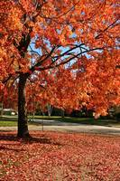 Calming Orange Fall Tree