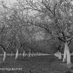 """The Orchard"" by EpicCreationsPhotography"