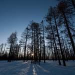 """Sun Through Trees 2, Bryce Canyon National Park"" by dawilson"