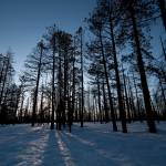"""Sun Through Trees, Bryce Canyon National Park"" by dawilson"