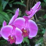 """Purple Orchids"" by mhamilton"