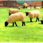 """""""White sheep on a farm in England"""" by Linandara"""