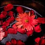 """""""Gerbera & rose petals"""" by carlosRestrepo"""