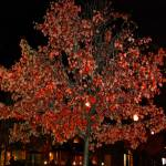 """Red Shadow Tree"" by PhthaloBluePhotography"
