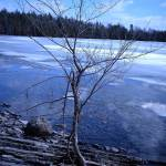 """Little Tree in a Ice Pond"" by PhthaloBluePhotography"