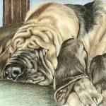 """Bloodhound Sleeper"" by Stonehenge"