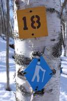Trail Markers on a Birch Tree