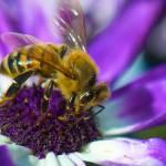 """Purple Pollen"" by annmcnabb"