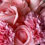 """Pink Roses and Carnations  P1090813"" by rayjacque"