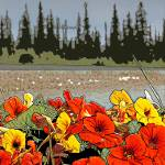"""Yukon Flowers"" by Joselyn_Holcombe"