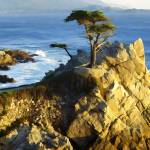 """Lone Cypress"" by rdwittle"
