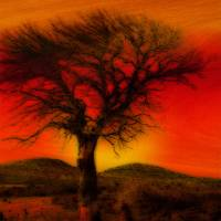 Oil Pastel Tree in Sunset Art Prints & Posters by Winona Sharp
