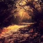 """Silent Sunlight"" by EduardoMuriedas"