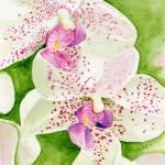 """Fuschia Cymbium Orchid"" by mozache"