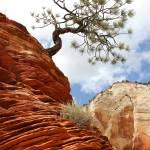 """Zion Leaning Tree"" by robkroenert"