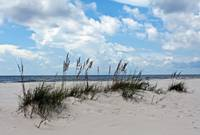 Sea Oat and Sand Dunes