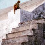 """Monkey at the Ghats, Varanasi"" by mattwade"