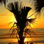 """Golden Sunrise Behind The Palm Tree 061"" by photographybydonna"