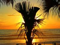 Golden Sunrise Behind The Palm Tree 061