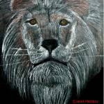 """011 Lion JM-008-011 Janet Marston"" by janetmarston"