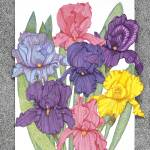 """Dots of Irises"" by ArtbyJudyNewcomb"