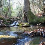 """The Tree on Big Possum Creek"" by Lorraine_Sommer"