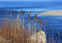 Bluff with Cattails and Boulder