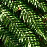 """""""fern 5"""" by imagineerz"""