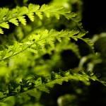 """""""fern1"""" by imagineerz"""