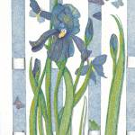 """Blue Iris"" by ArtbyJudyNewcomb"