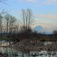Mount Rainier at Twilight Art Prints & Posters by Kathrine Lloyd