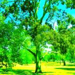 """Gum Tree uno"" by davidflurkey"
