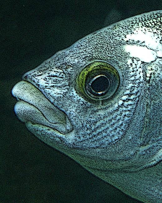 Stunning angler fish artwork for sale on fine art prints for Angler fish for sale