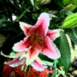 """Orchid on Parade"" by garlanddunston"