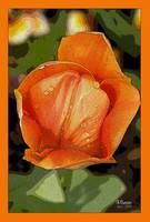 Tulip on orange background