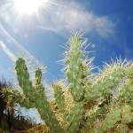 """Dry Heat Sun Over Cactus"" by mather_boehm_images"