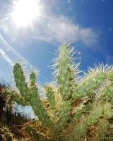 Dry Heat Sun Over Cactus