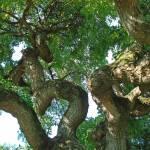"""pagoda tree"" by nichols02"
