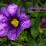 """Purple Flower"" by inspirationalphotocreatio"