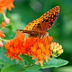 """""""Hungry Butterfly"""" by Lorraine_Sommer"""