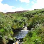 """An Irish Stream"" by markdowdell"