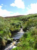 An Irish Stream