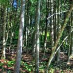 """The woods"" by Korayem"