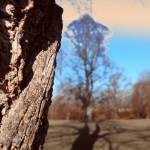 """""""Trees Shadow"""" by Linandara"""