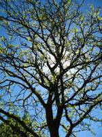 Sunshine Tree