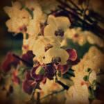 """orchids"" by TraceyLloyd"